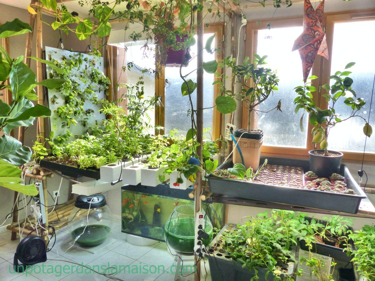 indoor vegetable gardens Bing Images (With images
