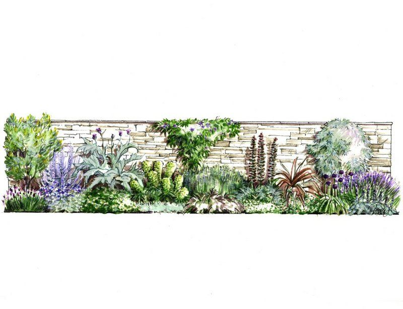 A series of planting elevations for the Garden on a Roll Website – Garden Planning Website