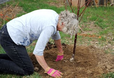 for Planting Fruit Trees in Spring