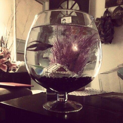 Betta fish tank idea pas b te pinterest aquarium for Petit aquarium original