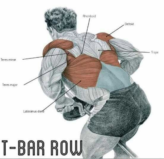 The-bar row for big lats