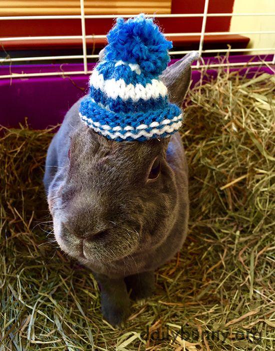 Bunny has a tiny pom pom beanie - January 27, 2016