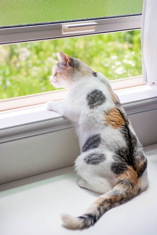 So Watchful Knows To The Minute When The Neighbors Walk Their Dog Said Dog Not Cat Friendly At All He Wishes They D H Cats And Kittens Pretty Cats Cats