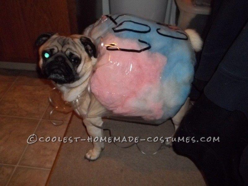 15 Coolest Dog Halloween Costume Ideas Pug Halloween Costumes