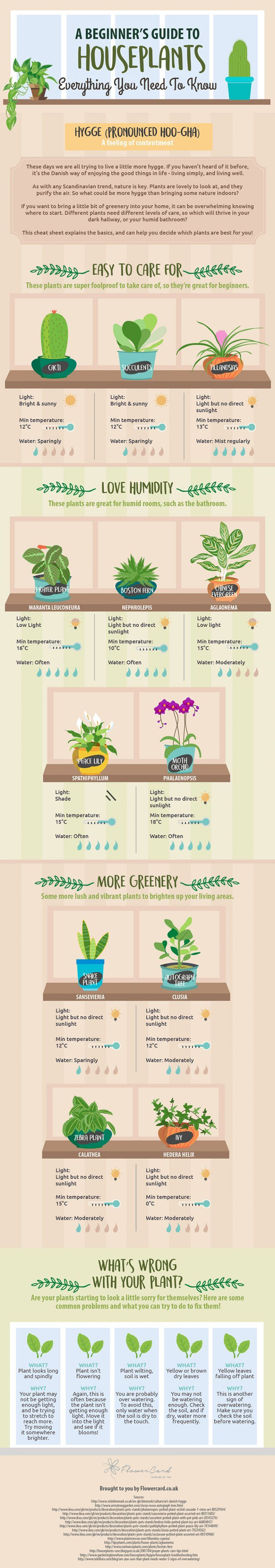 Keep Your Indoor Plants Alive With This Valuable Information