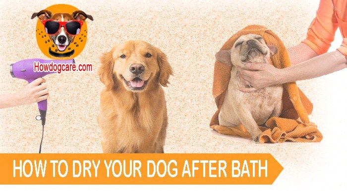 Using A Towel Is One Method You Can Use To Dry Your Dog After Bath