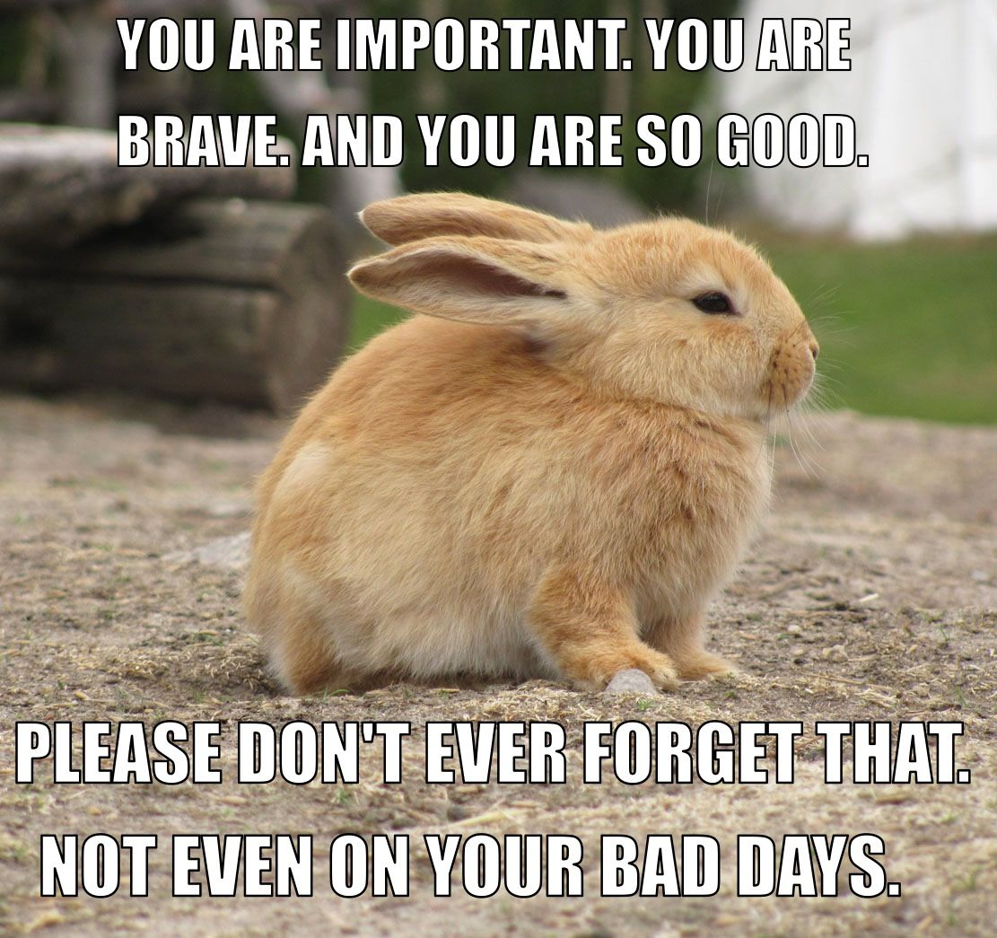Funny Body Positive Memes