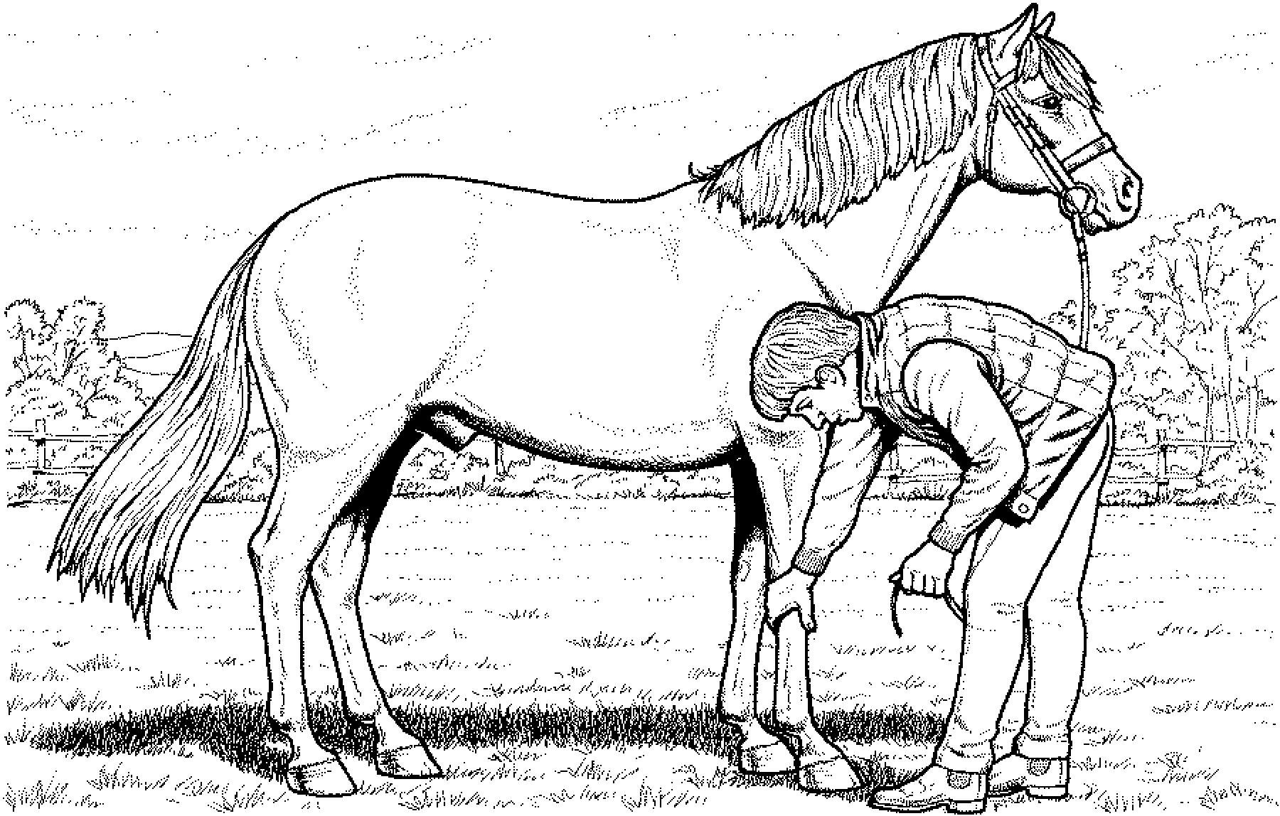 pferde ausmalbilder ausdrucken | Ausmalbilder pferde ...