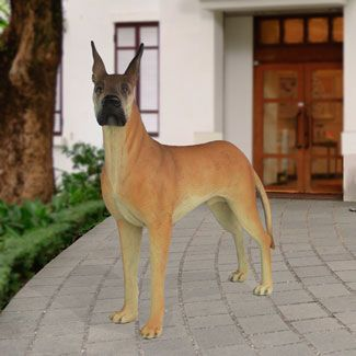 Life Size Great Dane Statue 61 H This Realistic Portrait Of The