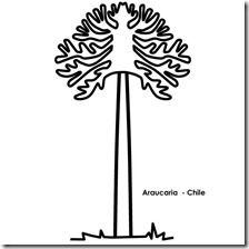 Araucaria Para Colorear 1 Dibujos Mapuches Disenos Mapuches Plantillas Imprimibles