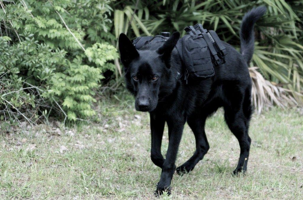German Shepherd Backpack Prepper Style Tactical Dog Gear Dog