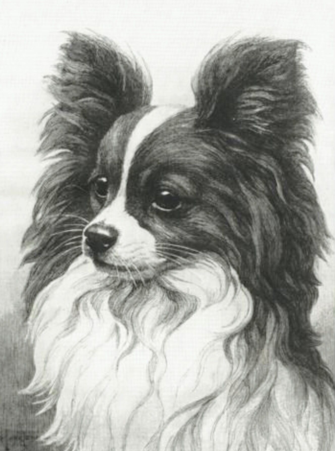 A Beautiful Charcoal Papillion Portrait Papillon Dog Dog Print Art Dog Art [ 1787 x 1327 Pixel ]