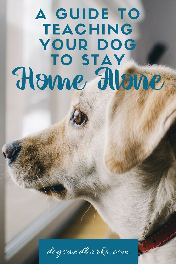 A Guide To Teaching Your Dog To Stay Home Alone Puppy Training