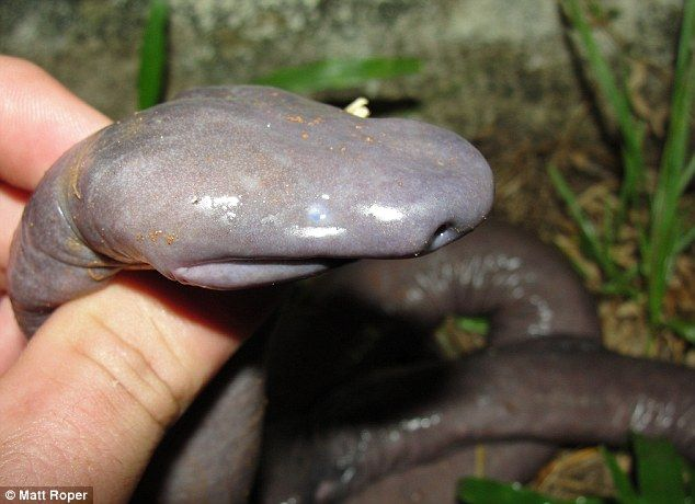 Scientists Discover New Species Of Blind Snake In Brazilian
