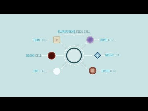 What are stem cells craig a kohn youtube repinned by what are stem cells craig a kohn youtube repinned by chesapeake college adult ed we offer free classes on the eastern shore of md to help ccuart Gallery