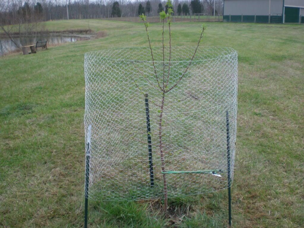 How To Protect Young Fruit Trees From Deer Google Search