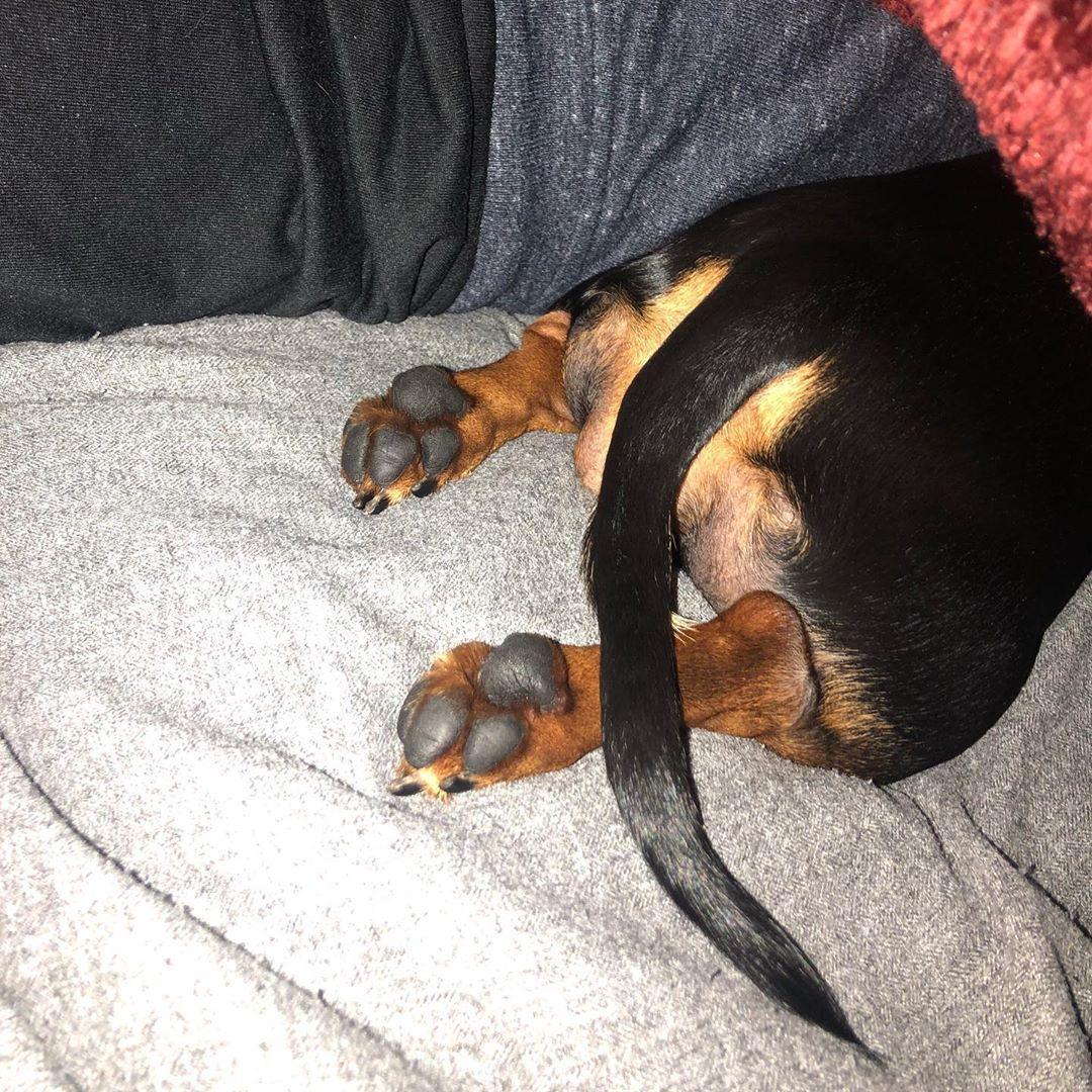Wiener Toes