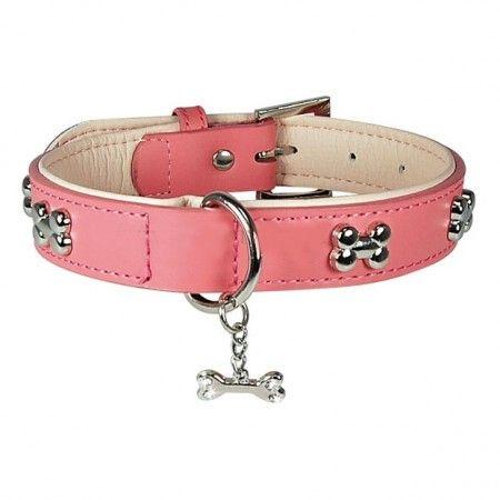 prix collier pour chien