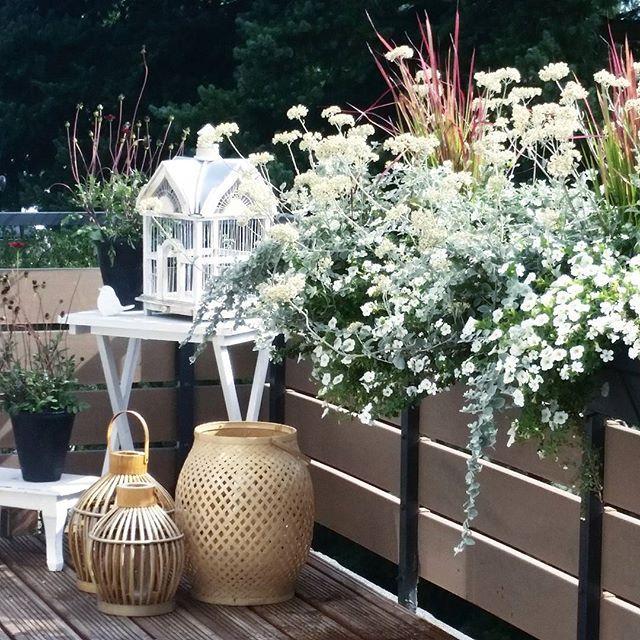 """""""{ g o o d  m o r n i n g  s u n s h i n e } ♡ Vielen Dank für all eure ❤ Wünsche euch einen wunderschönen sonnigen Tag!  #morning #morgenrutine #blumengiessen #terrasse #housofideasneueszuhause #houseofideasterrasse #flower #blumen"""" Photo taken by @houseofideas on Instagram, pinned via the InstaPin iOS App! http://www.instapinapp.com (08/06/2015)"""