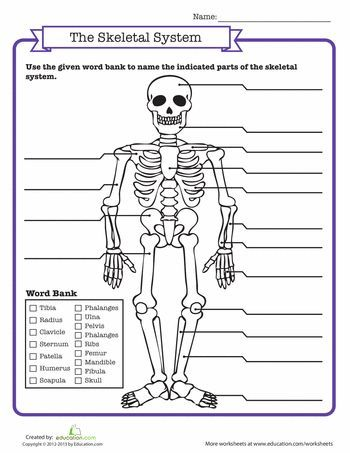 Skeletal System Quiz | Human body systems, Middle school ...