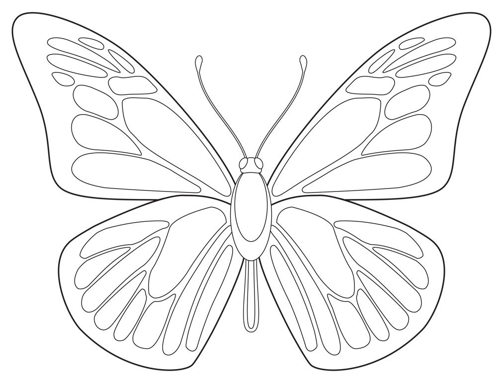 Outline Drawing Of A Butterfly