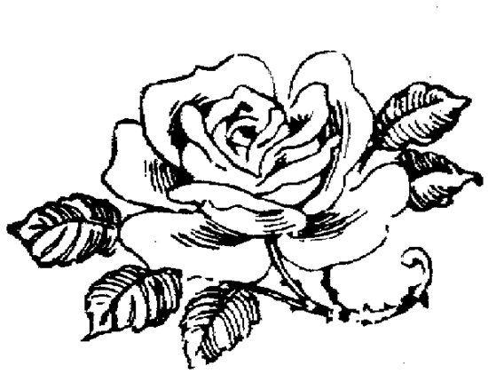 Рисунки цветов для вышивания -черно белые. Обсуждение на LiveInternet - Российский Сервис Онлайн-Дневников