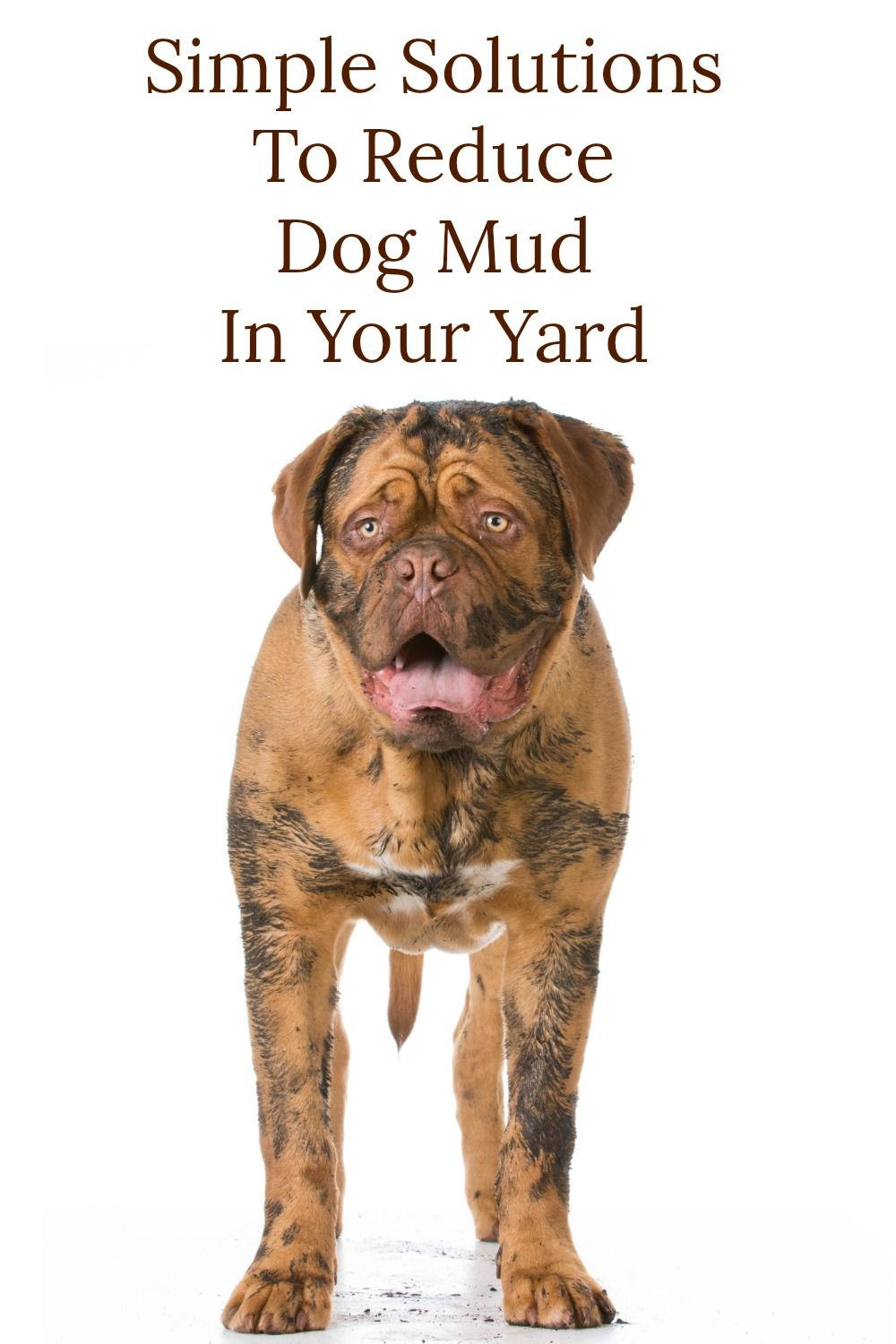 Simple Solutions To Reduce Dog Mud In Your Yard Backyard Layout