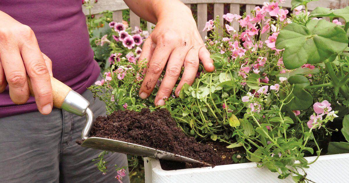 Balkonblumen Fantasievoll Kombiniert Balkon Blumen Krauterpflanzgefasse Blumenkasten Bepflanzen