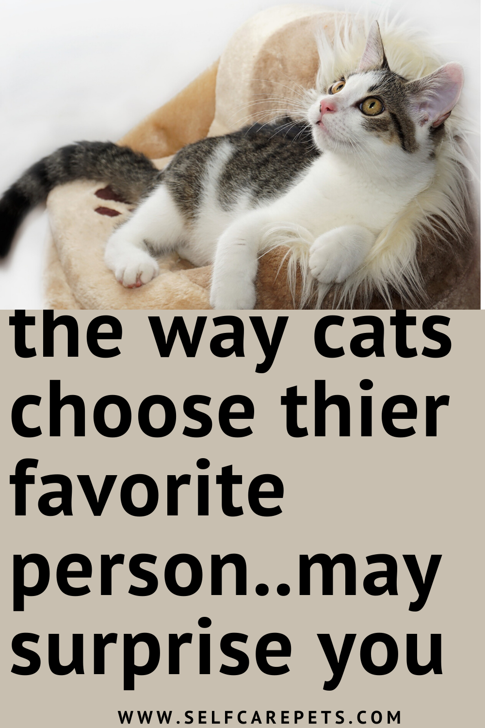 The Reasons Why Cats Get Attached To A Person More Than Others In 2020 Cat Parenting Cats Cat Exercise
