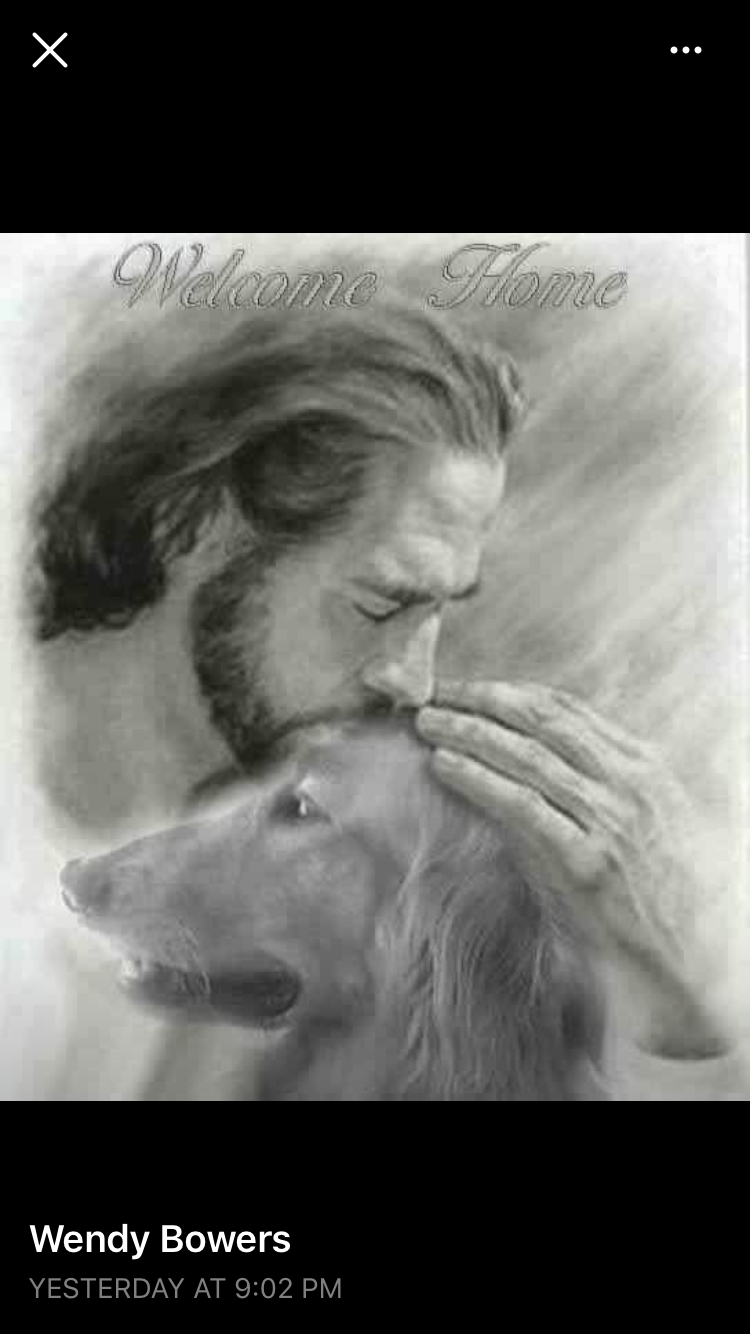 Pin by Shelley Berger Antonucci on MY JESUS Dogs, Dog