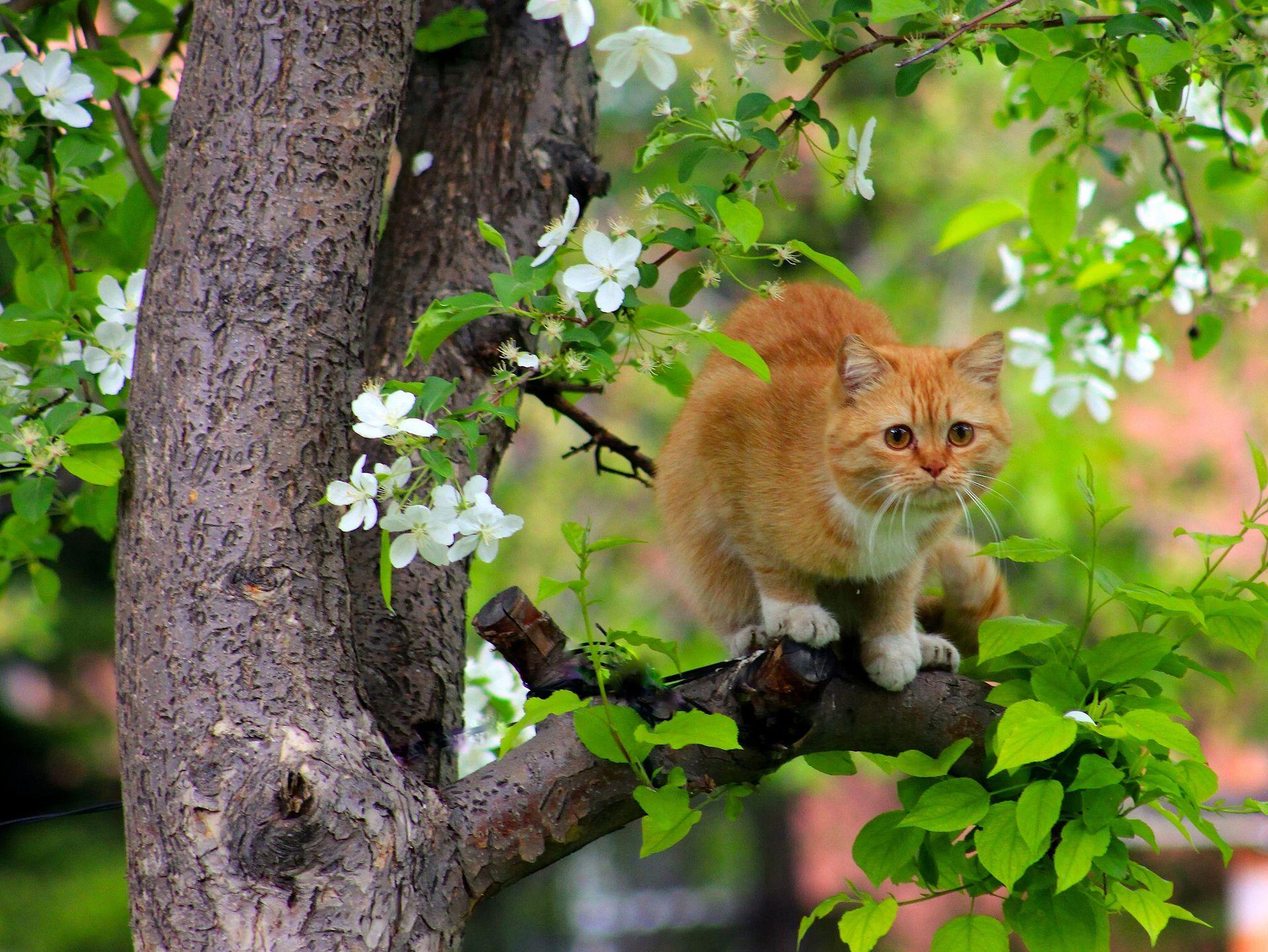 Скачать обои кошка, рыжая, дерево, цветение, коты ...