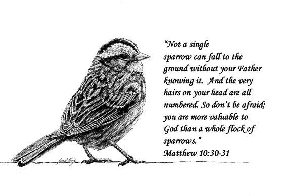 Sparrow Drawing With Scripture Quotes Tattoos Sparrow Tattoo