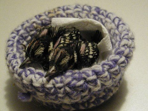 Wildlife Rescue Nests Use Your Scraps To Make A Nest For Baby Birds Donate To Your Local Wildlife Rescue Org Crochet Birds Crochet Knit Or Crochet