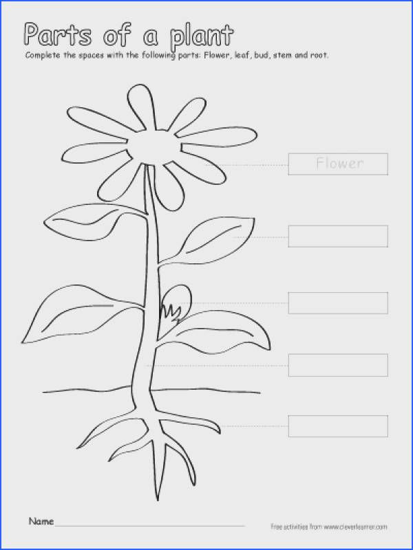 Label and Color the Parts Of A Plant A Free Printable