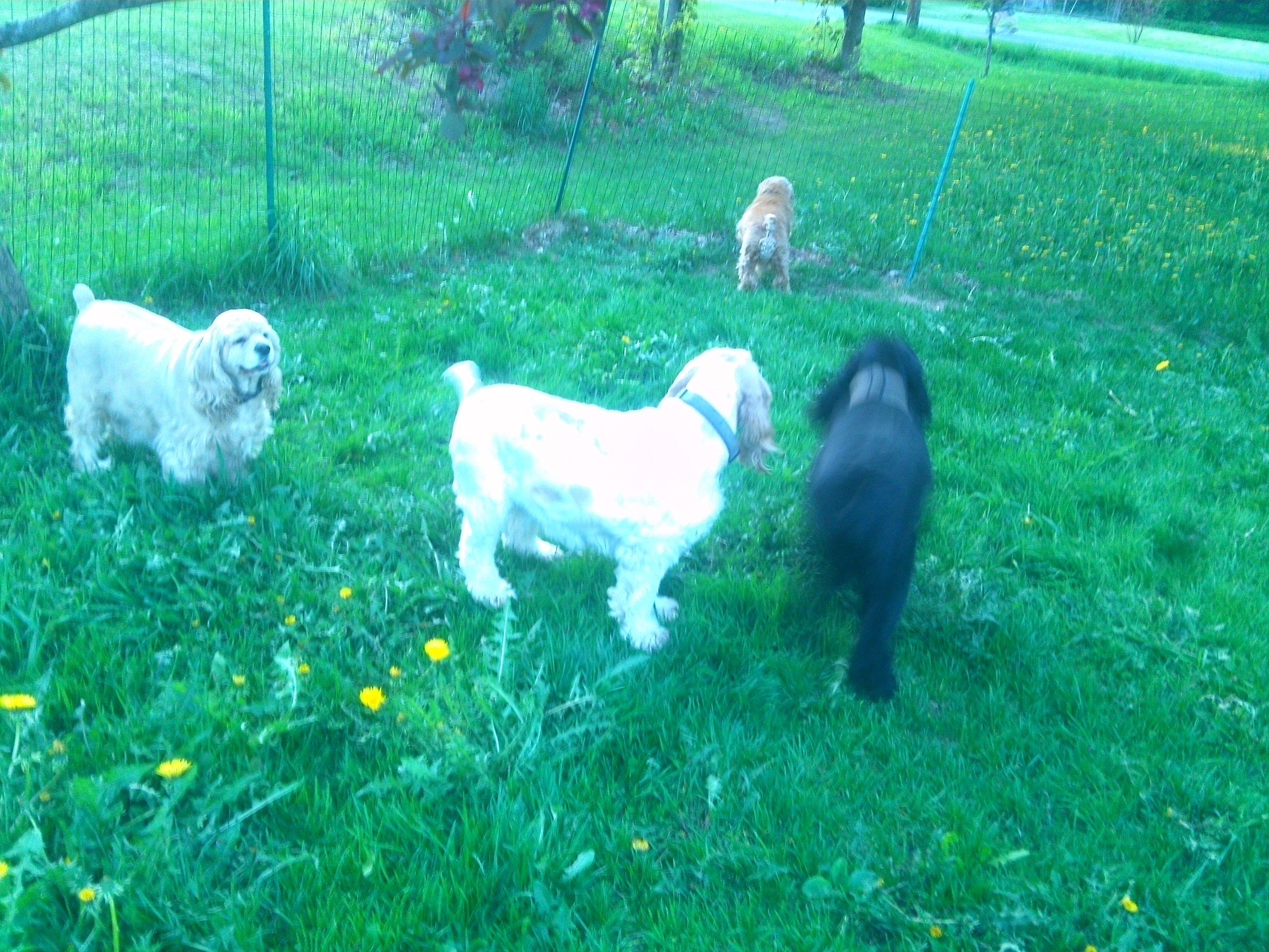Yard time, enjoying the green grass