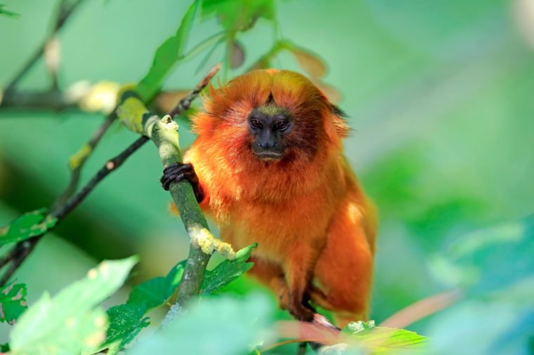17 Animals That Live Only In The Amazon Rainforest Amazon