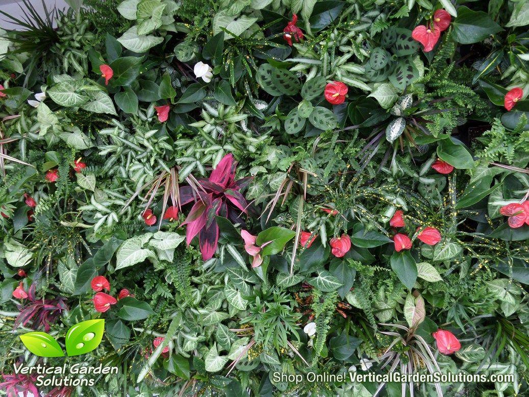 Tropical U0026 Succulent Living Wall | Vertical Garden Solutions