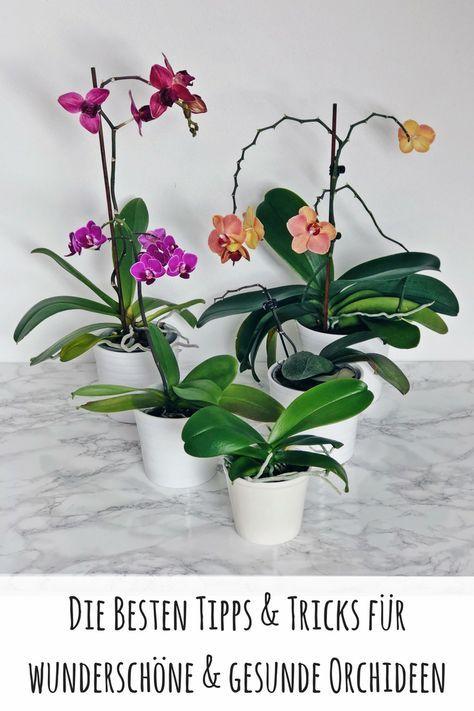 Tipps & Tricks für wunderschöne und gesunde Orchideen #bonsaiplants