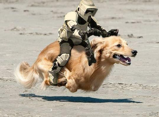 Dogs Celebrate Star Wars Day The Results Are Hilarious War Dogs Funny Dogs Dogs