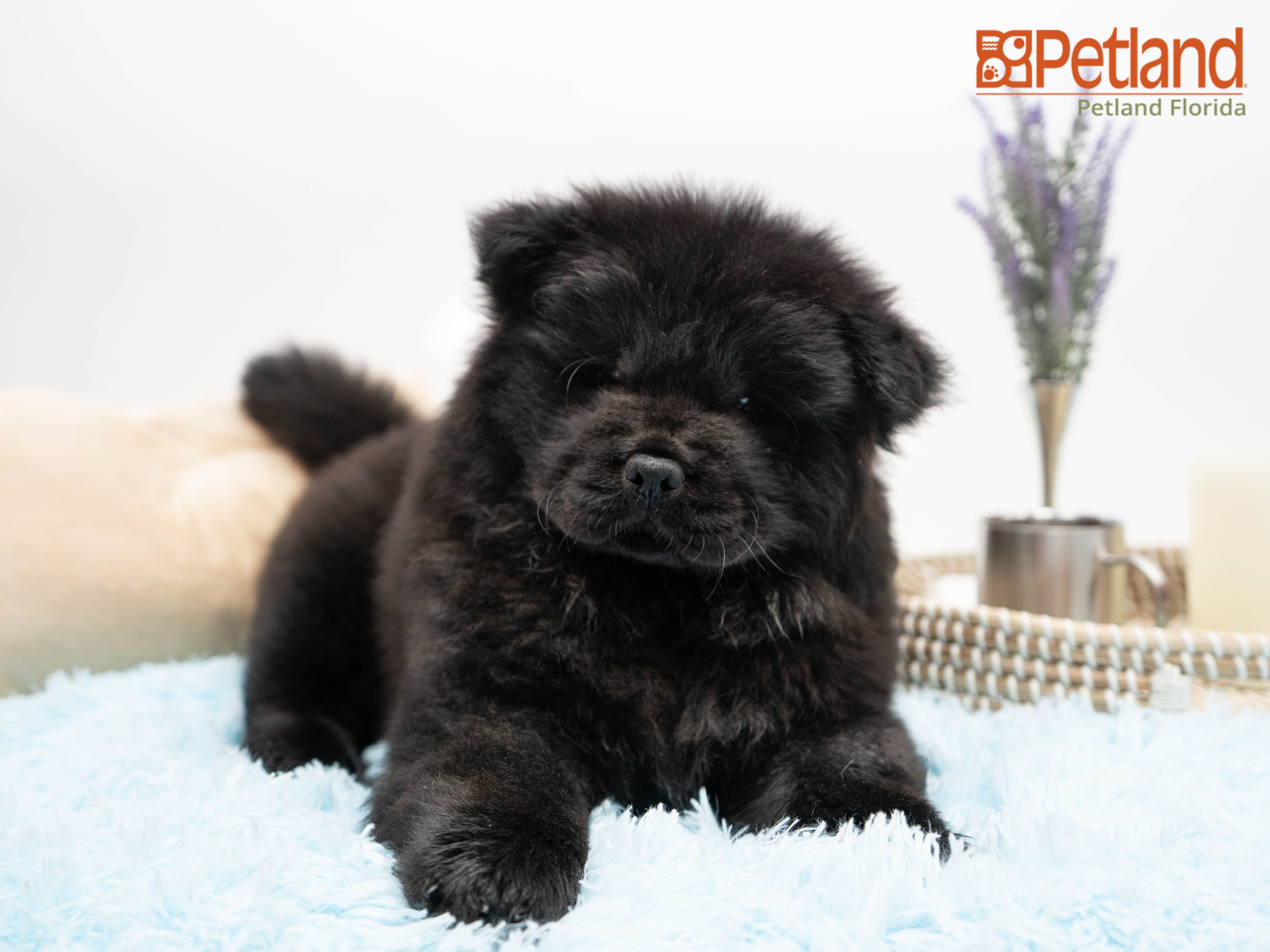 Puppies For Sale Dog Lovers Puppies Puppy Love
