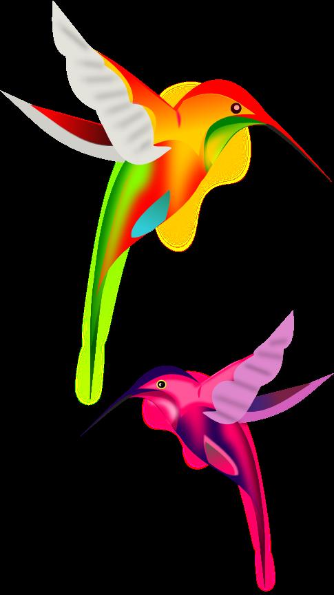 Colibries Colibri Dibujo Arte De Aves Colibri Fotos