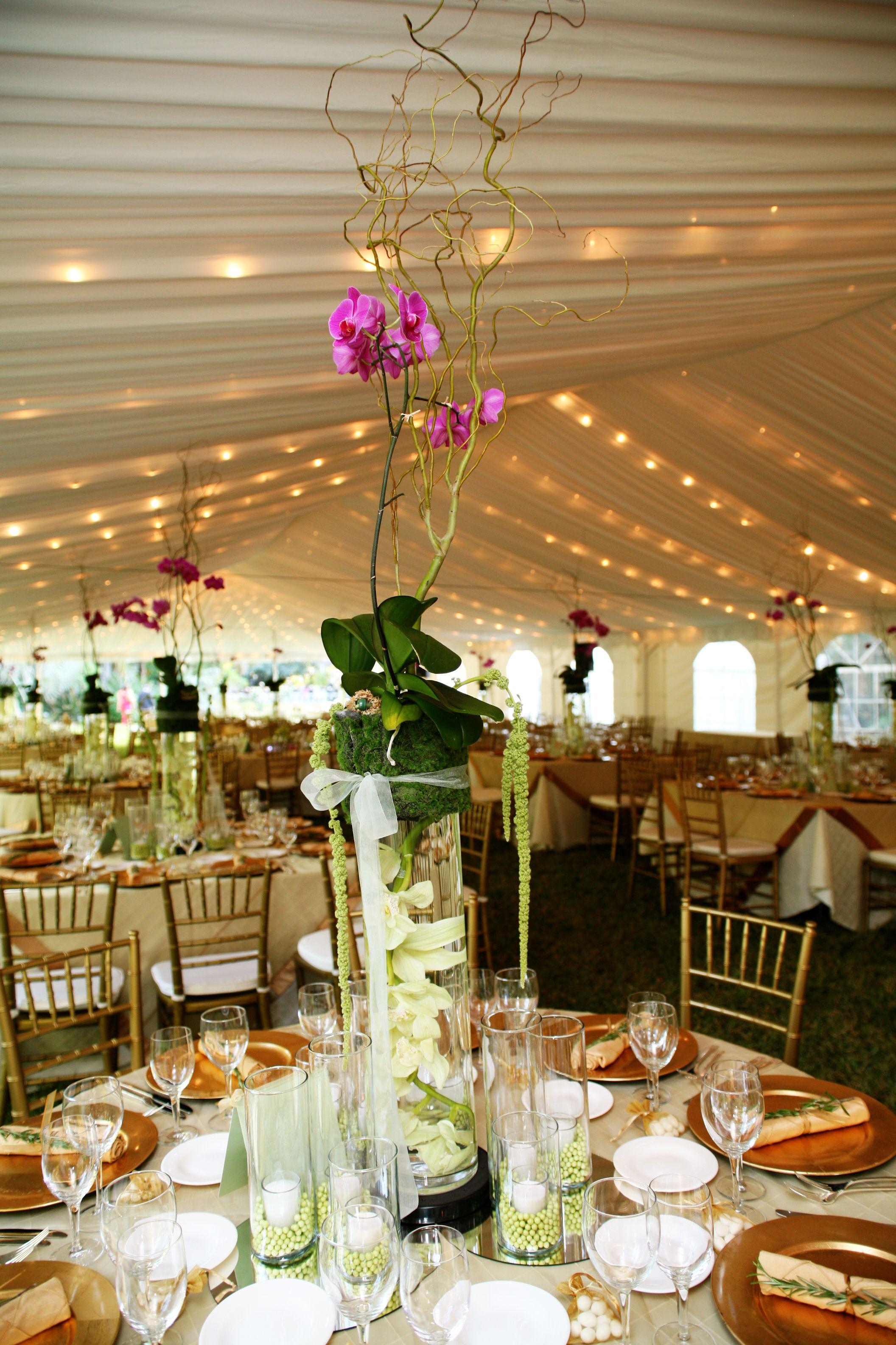garden tent reception Tent reception, Wedding