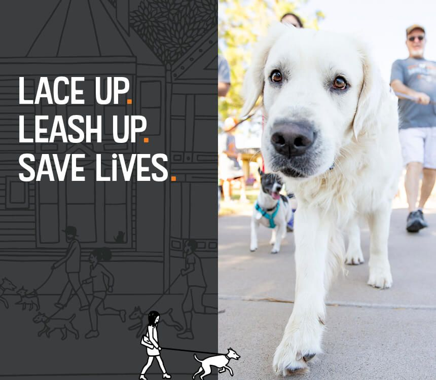 14++ Friends of homeless animals images