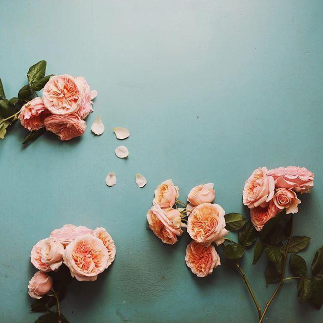 Happy Sunday #rose