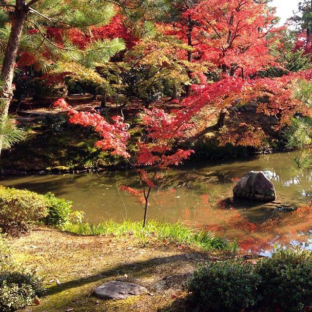 #japan #kyoto #temple #tojiin #momiji #redleaves #紅葉 #autumn