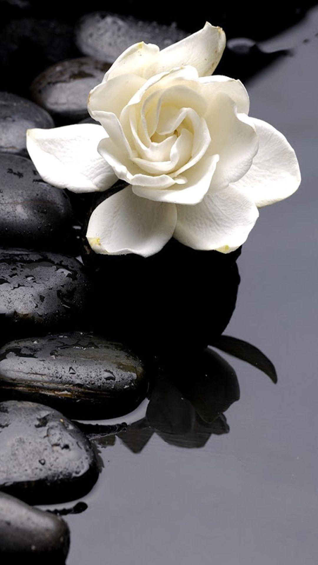 Fond D Cran Smartphone Fleur Zen 1080 1920 Gratuit Avec