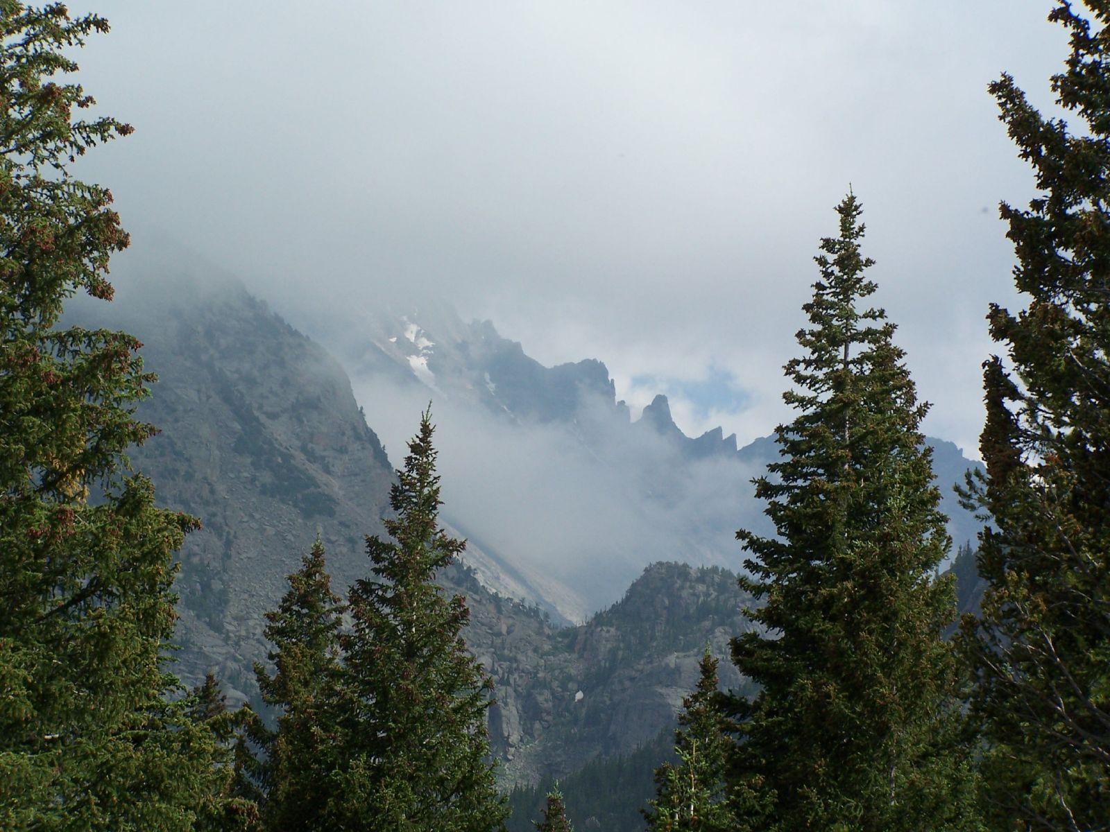mountains pine trees -#main