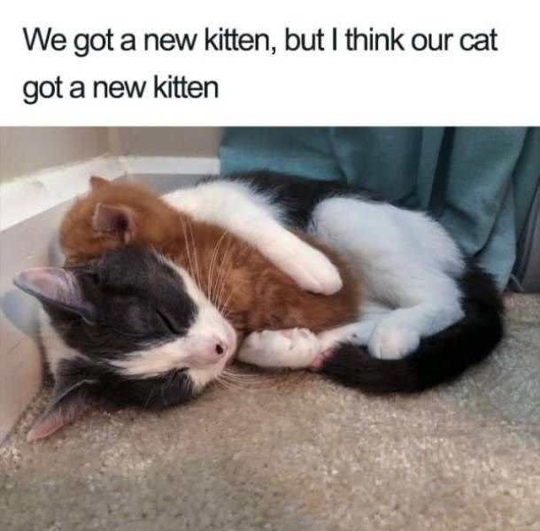 Wholesome Cat Memes Of Purrfection