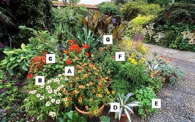 Container Gardening At Great Dixter, Sussex, UK Of