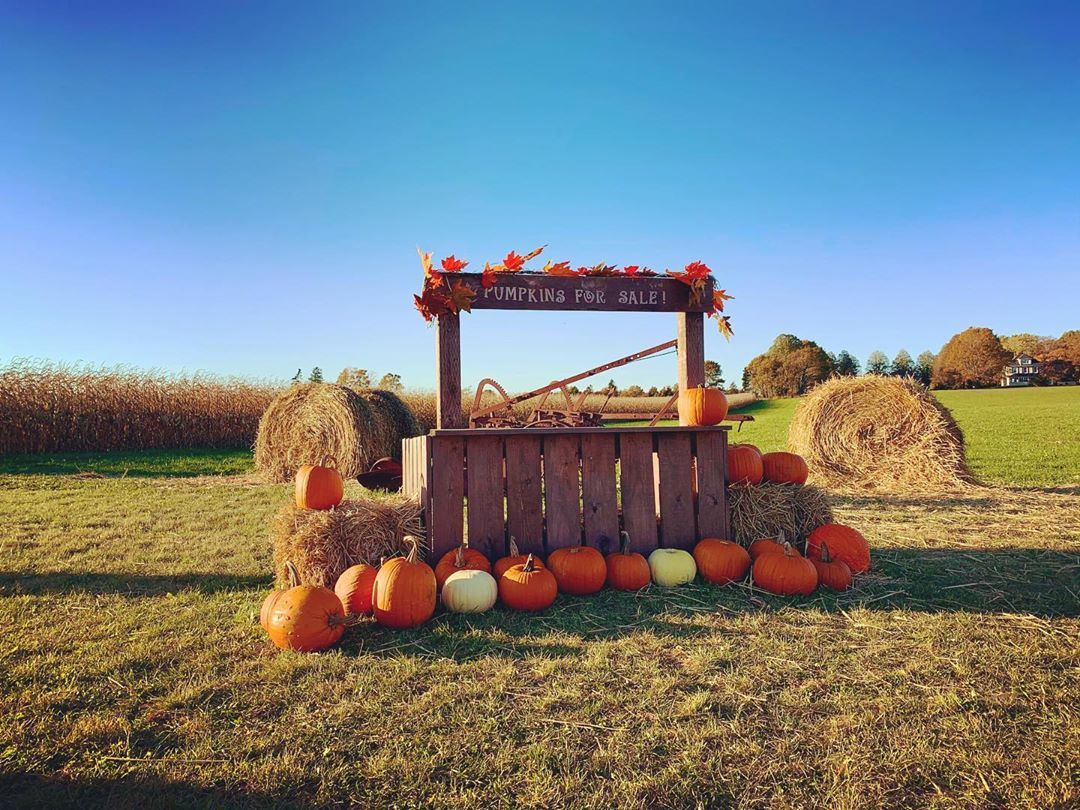 """𝗘𝗹𝗺𝗶𝗿𝗮 on Instagram: """"Have you already designed your pumpkin 🎃? Pick out your own pumpkin at a Pumpkin Patch . . . #blogto #cbctravel #cbcpei #noisepei…"""""""